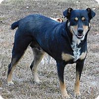 Adopt A Pet :: Jasmine - Middletown, DE