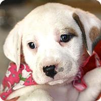 Adopt A Pet :: Gabby - West Grove, PA