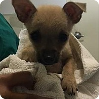 Adopt A Pet :: 16-12-3733 Mistletoe - Dallas, GA