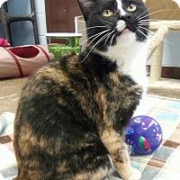 Adopt A Pet :: Opal - Shinnston, WV