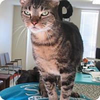 Adopt A Pet :: Lily - Elizabeth City, NC