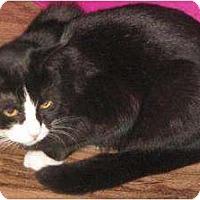 Adopt A Pet :: Tinsel - Orillia, ON