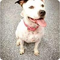 Adopt A Pet :: Henrietta - Mesa, AZ