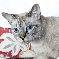 Adopt A Pet :: Minouche - Bonita Springs, FL