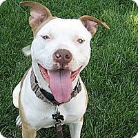 Adopt A Pet :: Darla - San Jose, CA