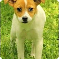 Adopt A Pet :: Candie - Staunton, VA