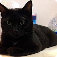 Adopt A Pet :: Franklin - Alexandria, VA