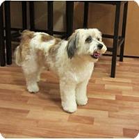 Adopt A Pet :: Sammy--female - Tacoma, WA