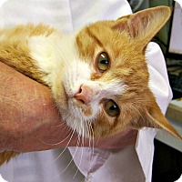 Adopt A Pet :: Orange Julius - Toledo, OH