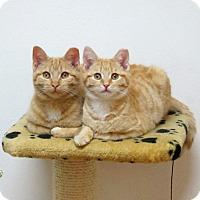 Adopt A Pet :: Frasier - Brooklyn, NY