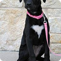 Adopt A Pet :: Ella - Weatherford, TX