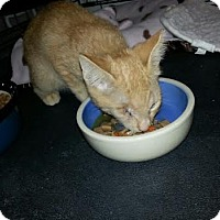 Adopt A Pet :: Peanut - Fountain Hills, AZ