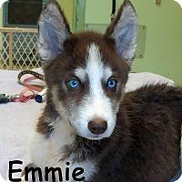 Adopt A Pet :: Emmie - Warren, PA