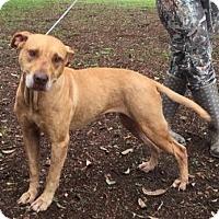 Adopt A Pet :: HONEY - Odessa, FL