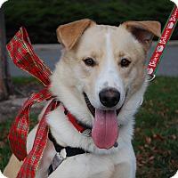 Adopt A Pet :: Zion - Richmond, VA