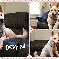 Adopt A Pet :: Diamond - DOVER, OH