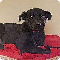 Adopt A Pet :: Duchess - Waldorf, MD