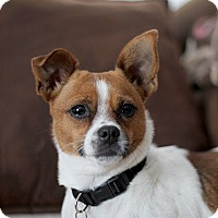 Adopt A Pet :: ChaCha - Long Beach, NY