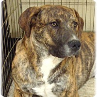 Adopt A Pet :: Sherman - Las Vegas, NV
