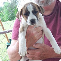 Adopt A Pet :: Beth - Hohenwald, TN