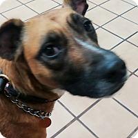 Adopt A Pet :: Cammie - Lebanon, CT