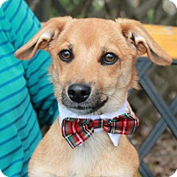 Adopt A Pet :: Sprocket-ADOPTED! - Garfield Heights, OH
