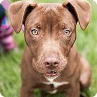Adopt A Pet :: June Bug - Villa Park, IL