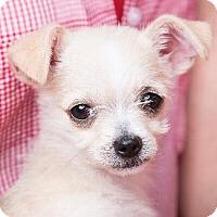 Adopt A Pet :: SUGARPLUM - Pt. Richmond, CA