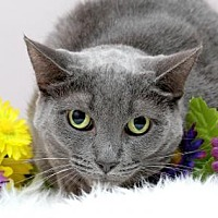 Adopt A Pet :: Smokey - Sterling Heights, MI
