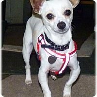 Adopt A Pet :: Ernie - San Diego, CA