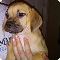Adopt A Pet :: Slade - Orlando, FL