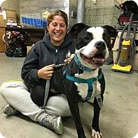 Adopt A Pet :: Hemingway - Cranston, RI