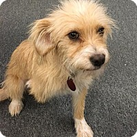 Adopt A Pet :: Pearl - Beloit, WI
