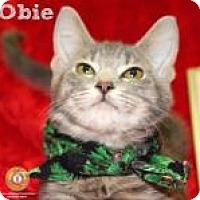 Adopt A Pet :: Obie - Newport, KY
