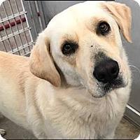 Adopt A Pet :: Duke - Coppell, TX