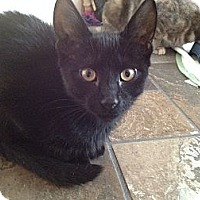 Adopt A Pet :: Harley-Mellow - East Hanover, NJ