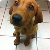 Adopt A Pet :: Minnow - Foster, RI