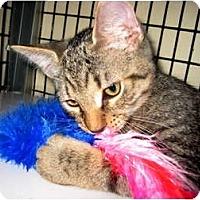 Adopt A Pet :: Carson & Koi - Deerfield Beach, FL