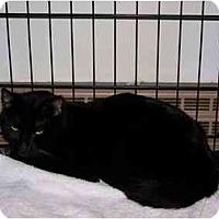 Adopt A Pet :: Ahab - Syracuse, NY