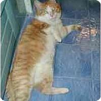 Adopt A Pet :: Jumbo-Sponsor - Toronto, ON