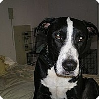 Adopt A Pet :: Quincey - Apex, NC