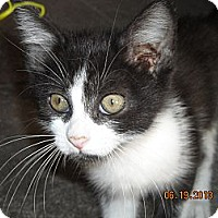 Adopt A Pet :: Colton - Riverside, RI