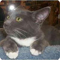 Adopt A Pet :: Simone - Richmond, VA
