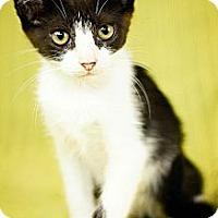 Adopt A Pet :: Cupcake - San Antonio, TX