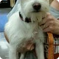 Adopt A Pet :: Mark - Phoenix, AZ