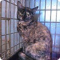 Adopt A Pet :: Vixen - Ringwood, IL