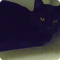 Adopt A Pet :: Jaguar - Hamburg, NY