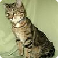 Adopt A Pet :: Welby - Powell, OH