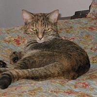 Adopt A Pet :: zz 'Lena' courtesy listing - Cincinnati, OH