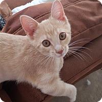 Adopt A Pet :: Dozer - The Colony, TX